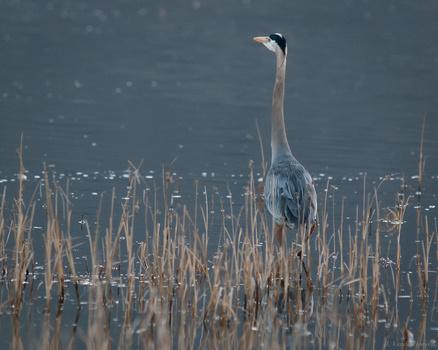 Morning Blue by Jake VanderHoeven