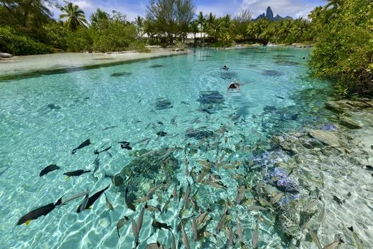 Natural Aquarium by Nenad Uzelac