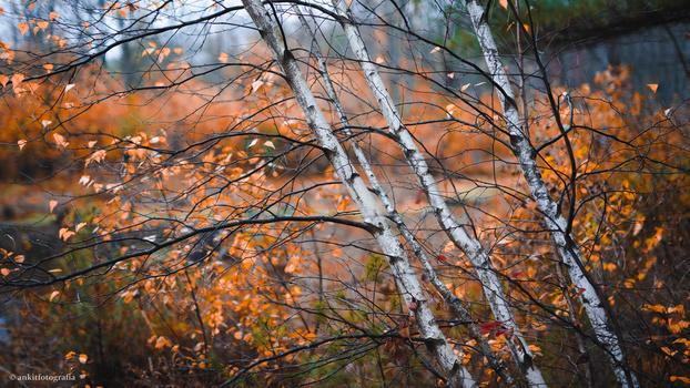 Aspen by ankit fotografia