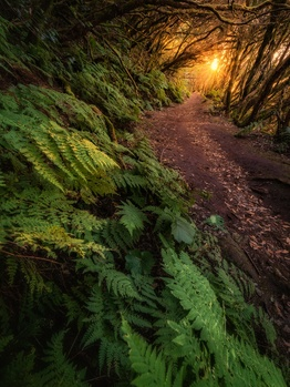 Enchanted Forest by Efren Yanes