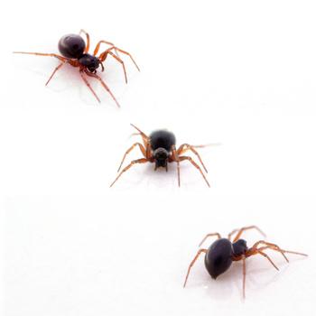 3 Spiders by Robert Felker
