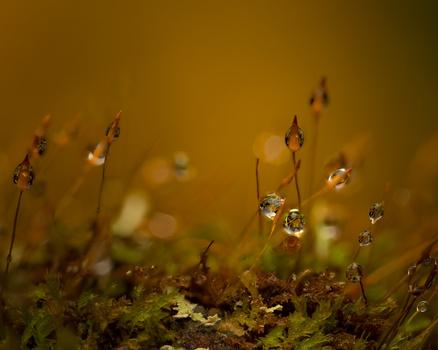Moss by Skyler Ewing
