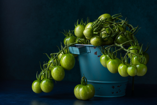 Green tomatoes by Skyler Ewing