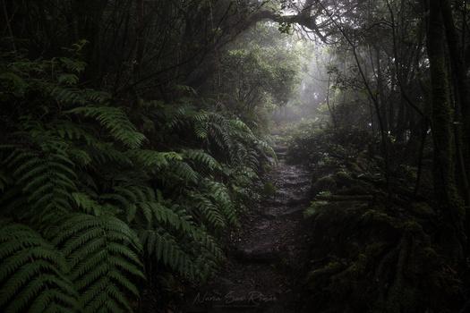 Dark Path by Nusan Photography