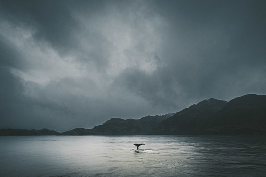 Lonely Whale by Manuel Fuentes
