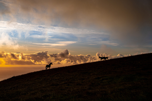Sunset Horses by Manuel Fuentes