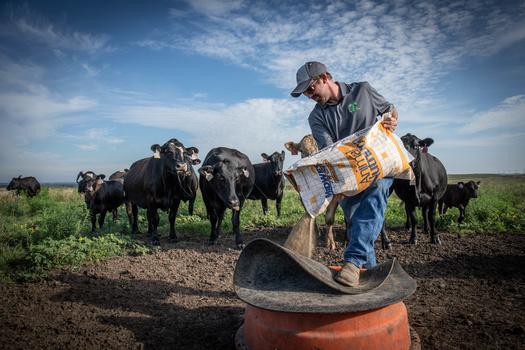 American Rancher by Tim Strathman