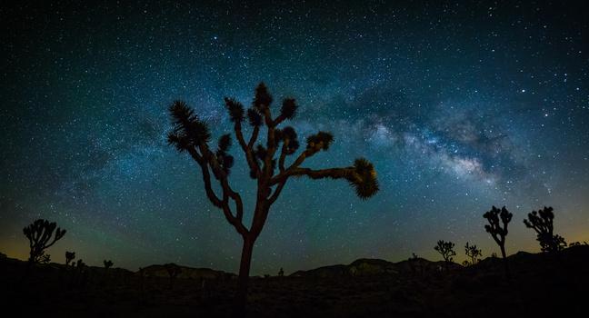 Joshua Tree Framed by The Milky Way