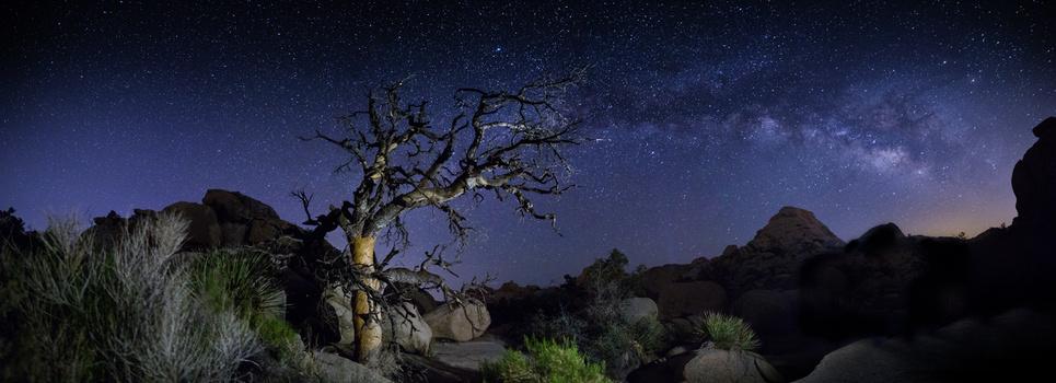 Ancient Pinyon Pine at Joshua Tree framed by the Milky Way.