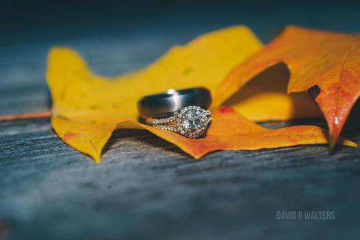 Fall Rings