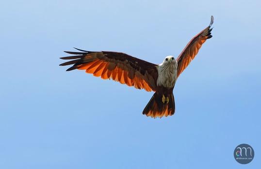 Wings of Fire...