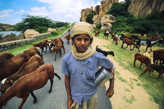 The Herdswoman