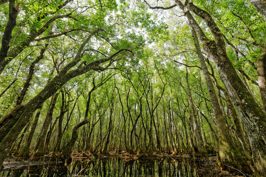 The Trees of South Swamp