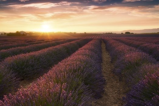 Evening in Provence
