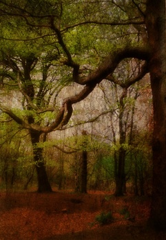 Lost in the magic wood by Paola De Giovanni