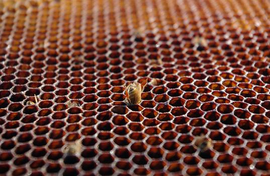 Hive Destruction