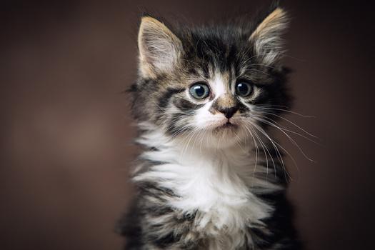 Cute Kitten by Jan de wild