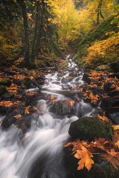 Autumn colored stream by Shumon Saito