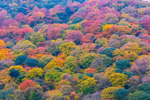 Autumn tree in Kyoto, Japan