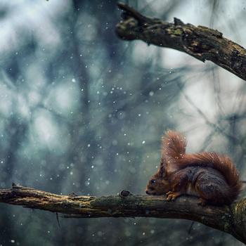 snowy weather by Bjørn - Audun Myhre