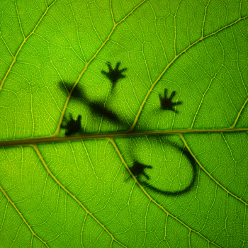 Sunbathing gecko on leafe by Leon Dafonte Fernandez
