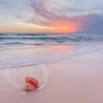 Pink Sands by Erika Valkovicova