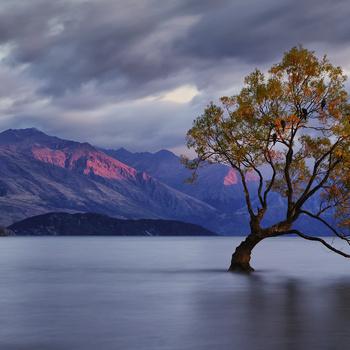 Wanaka Tree 2 by Dan MacPhail