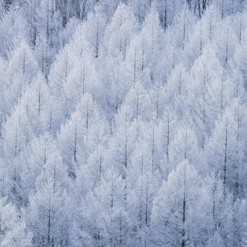 Patterns of winter by Shumon Saito