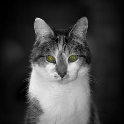 Gustavo Viteri's picture