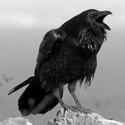 Corvus Corax's picture