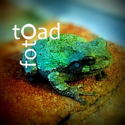 Foto Toad's picture