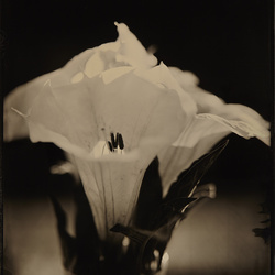 Tintypes, ambrotypes and wet plate