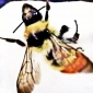 tricia montgomery's picture