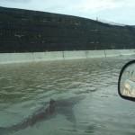 hurricane shark puerto rico fake