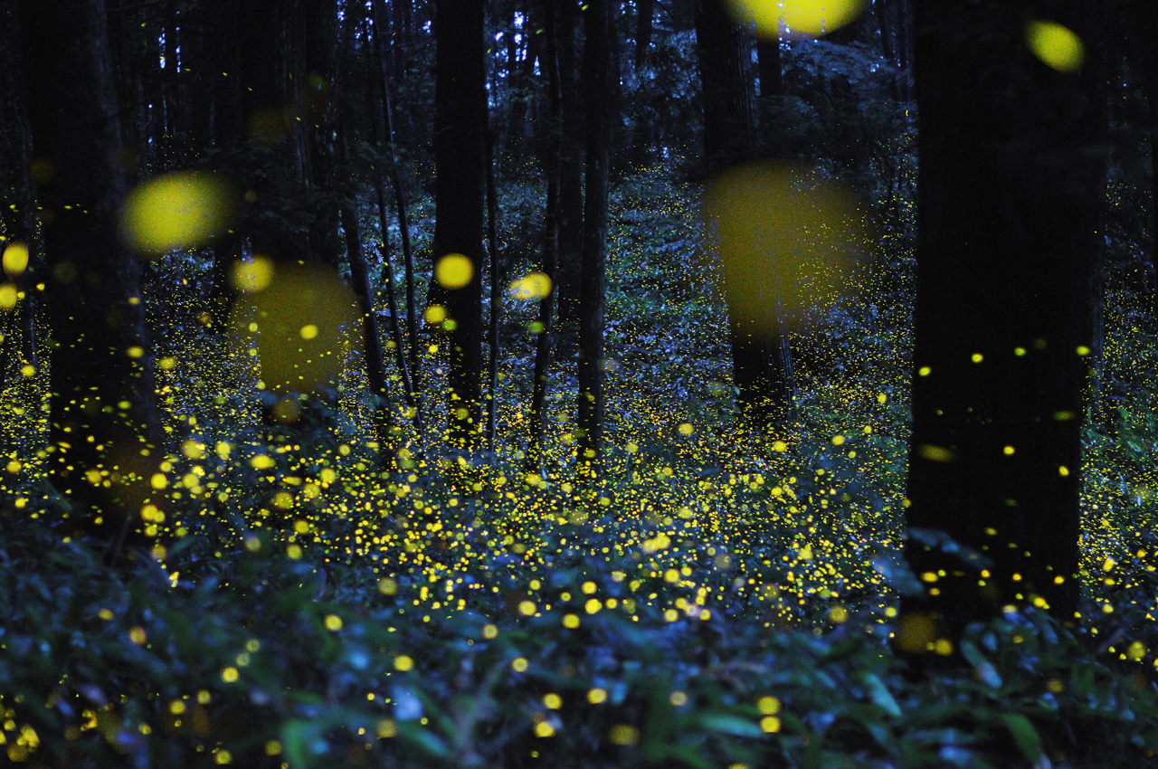 Crewdson Fireflies