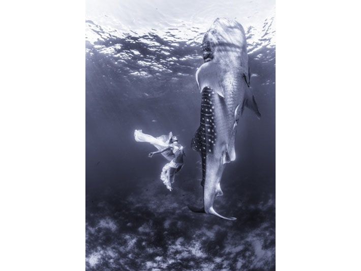 fashion whale shark shoot Kristian Schmidt1