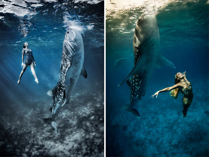 fashion whale shark shoot and Shawn 5