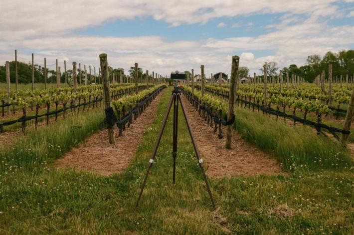 Duck Walk Vineyard Proposal
