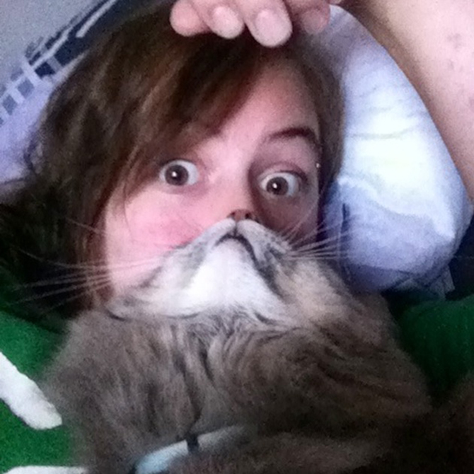 cat beards the latest funny photo trend involving cats fstoppers