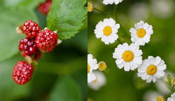 garden_shots