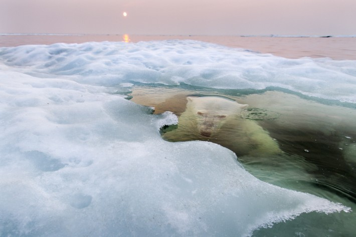 Grand Prize and Nature Winner Paul Souders, Seattle, Washington - The Ice Bear
