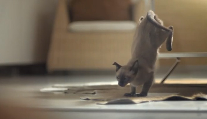 IKEA-Releases-100-Cats-Into-a-Store-and-the-Result-is-Beautiful-Review