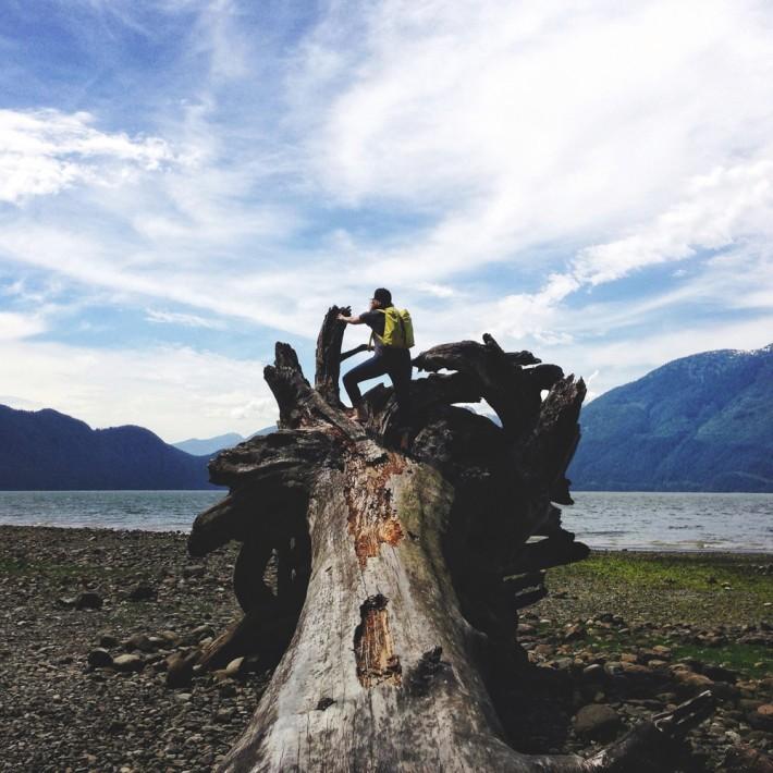Fallen-Tree-Lookout