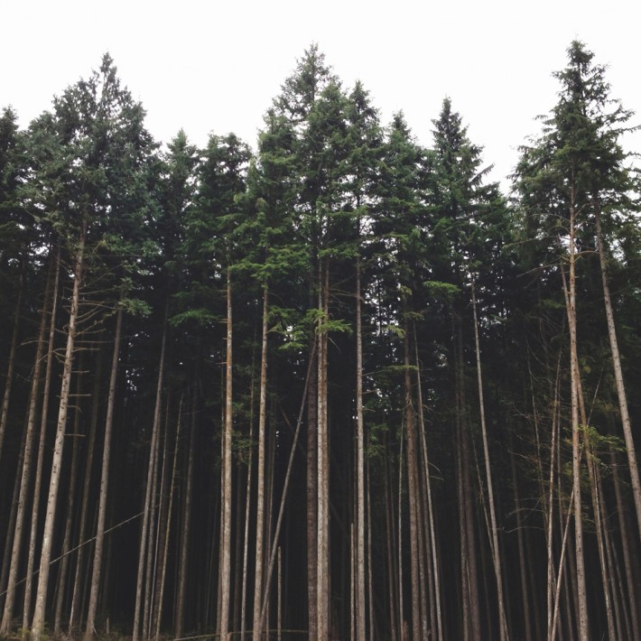 Forest-Instagram