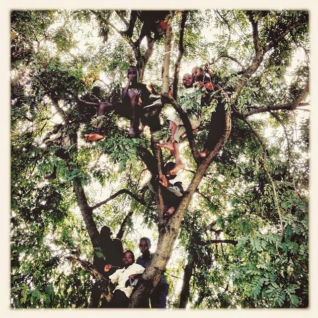 7-Rutshuru-Tree-DRC-Congo-Magnum