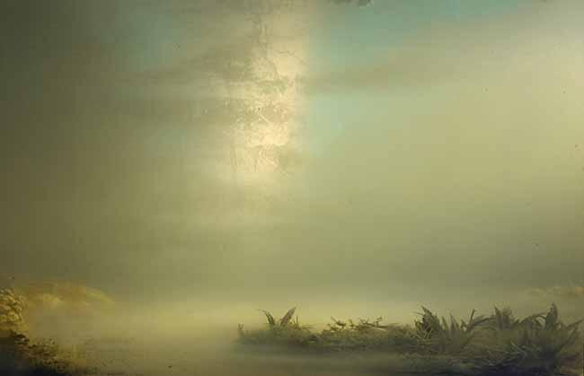 palm-keever-landscape