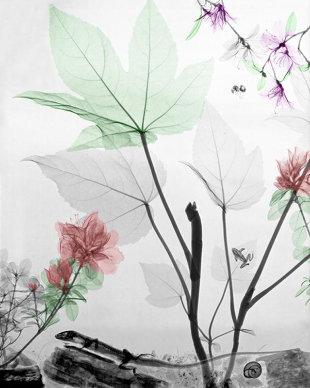 Leaves-Van't-Riet