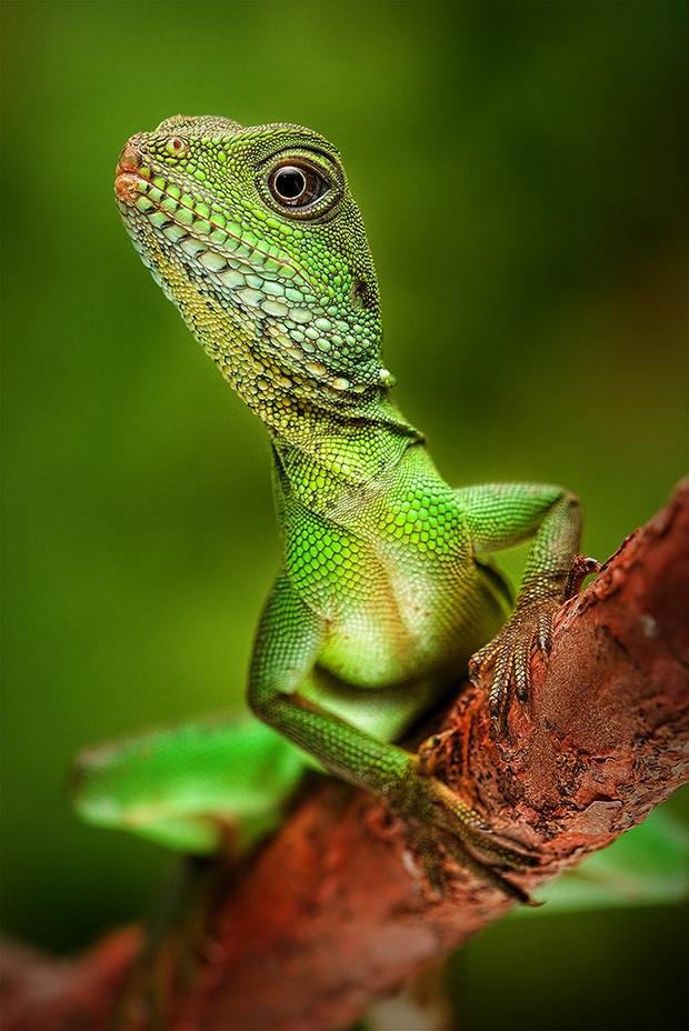 Christopher Schlaf, Amphibians & Reptiles