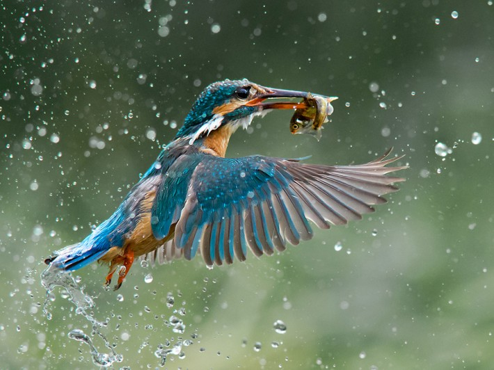 Jamie MacArthur, Grand Prize (Birds)
